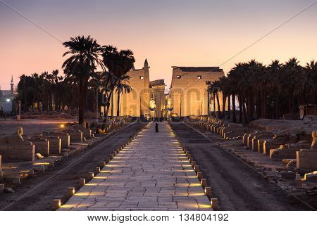 Night shot of Avenue of Sphinxes at Luxor temple.