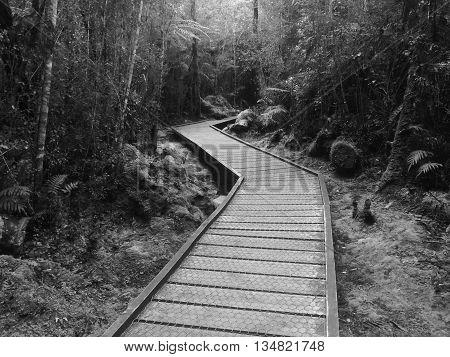 Boardwalk through Lake Matheson Forest Black and White