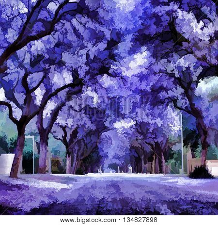 Summer jacaranda blooming. Violet jacaranda trees blooming with flowers picture.