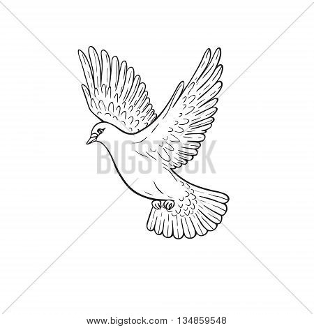 Simplified image of flying dove isolated on white. Hand drawn contoured pigeon.