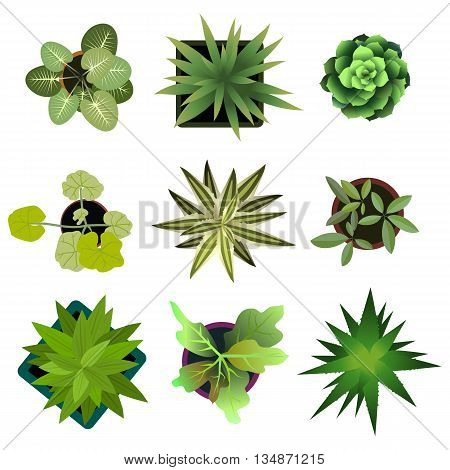 Top view. plants Easy copy paste in your landscape design projects or architecture plan. Isolated flowers on white background. Vector eps 10