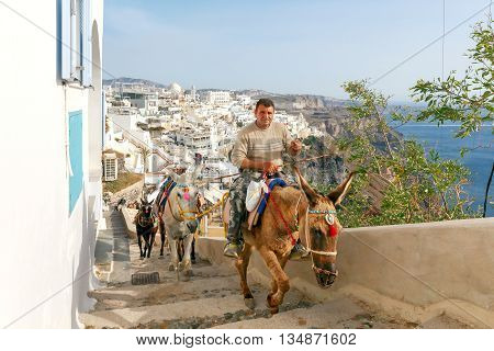 Santorini, Fira - April 30, 2016: Donkeys to transport tourists from the harbor to the town Fira, located on the top of the mountain.