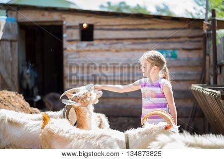 little girl with goat on the farm