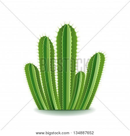 Spurge cactus isolated on white photo-realistic vector illustration
