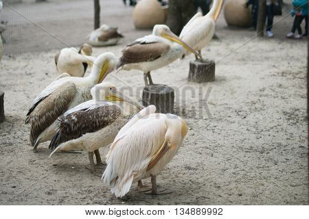a flock of pelicans in the aviary
