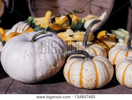 One Ghost Pumpkin with a collection of striped pumpkins and gourds. Cool tone variation
