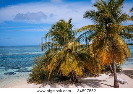 Tropical beach of Maldivian island with blue coral lagoon and coconut palm trees.