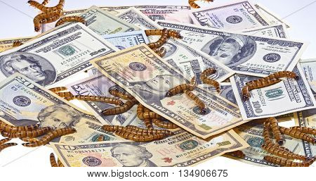 Economic crisis concept with money and worms, closeup background