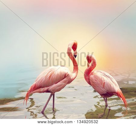 Two Pink Flamingos near water