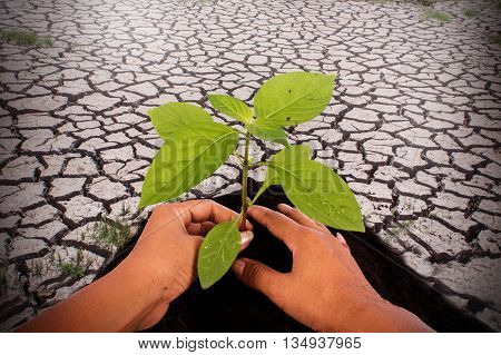 Environment concepthand plant tree on cracked ground from rainless