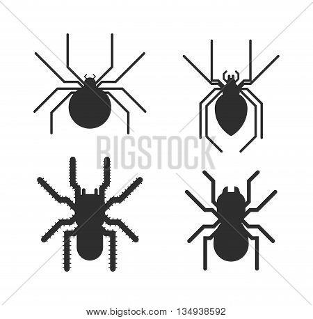 Vector poisonous spiders. Poisonous spiders arachnid danger isolated