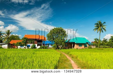 Rice fields with rural villages on blue sky thailand