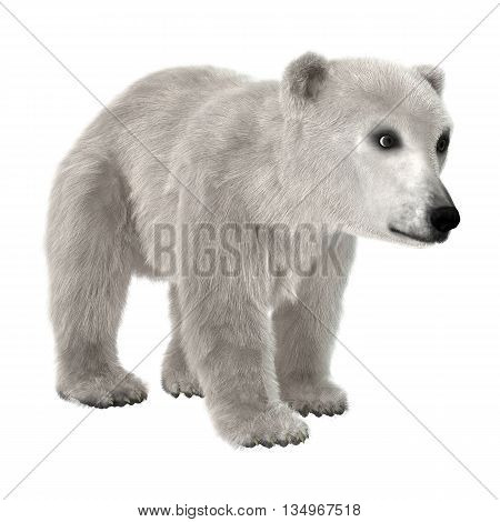 3D Rendering Polar Bear Cub