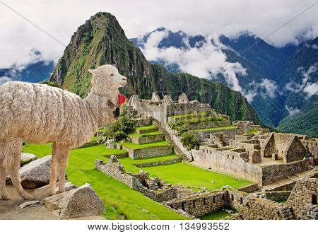 Lama in Machu Picchu Peru. UNESCO World Heritage Site