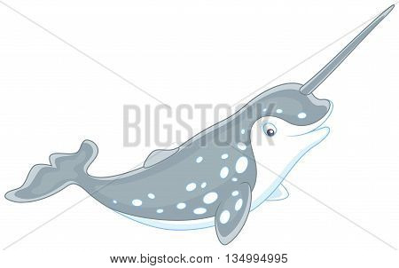 Vector illustration of a grey spotted narwhal with a long tusk, on a white background