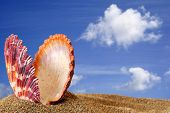 open bivalve seashell on golden sand beach with blue sky background poster