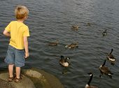 a little boy standing on some steps looking at ducks and geese. poster