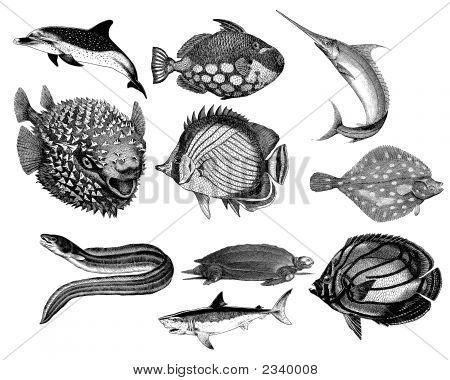 Sea Creatures #2