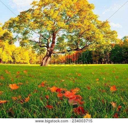 Autumn Picturesque Landscape. Colorful Autumn Landscape Park With Golden Autumn Trees And Fallen Map