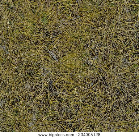 Dry Grass Texture Background. Green Grass And Dry Grass. Abstract Nature Background. Fresh Grass