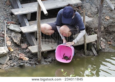 Woman Releasing Living Crab Back To Mangrove Forest. The Condition Of Mangrove Ecosystems, Meditatio