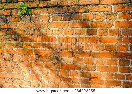 Large Expanse Of Red Brick Wall. Well Lit By Sunlight And Dappled Shaddows.  Great Background Shot.