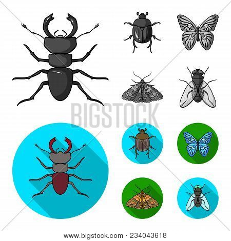 Wrecker, Parasite, Nature, Butterfly .insects Set Collection Icons In Monochrome, Flat Style Vector