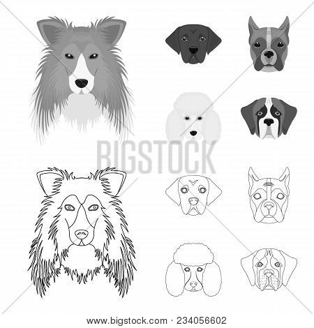 Muzzle Of Different Breeds Of Dogs.collie Breed Dog, Lobladore, Poodle, Boxer Set Collection Icons I