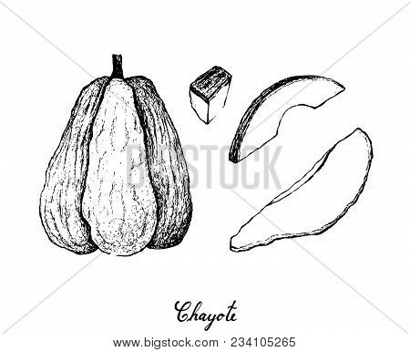 Vegetable And Fruit, Illustration Hand Drawn Sketch Of  Fresh Chayote Or Sechium Edule Fruit Isolate
