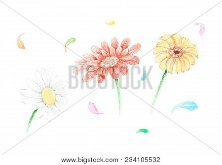 Symbol Of Love, Bright And Beautiful Gerbera And Osteospermum Daisy Flowers Or Cape Daisy Blossoms I