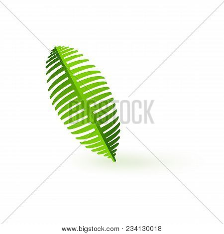 Fresh Green Palm Leaf Branch Isolated On White Background. Silhouette Of Exotic Tropical Plant - Bio