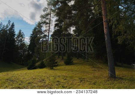 Forest Landscape. Conifer Forest Trees On The Hill In The Dense Gloomy Mysterious Forest. Gothic For