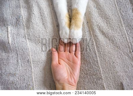 Friendship Between Human And Cat. Paws Are On The Hand