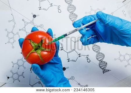Gmo Scientist Injecting Green Liquid From Syringe Into Red Tomato - Genetically Modified Food Concep