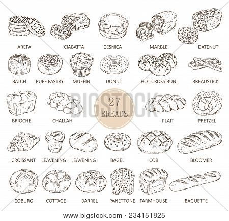 Set Of Isolated Sketches Of Breads. Loaf Of Arepa And Sliced Ciabatta, Cesnica And Muffin, Donut Or
