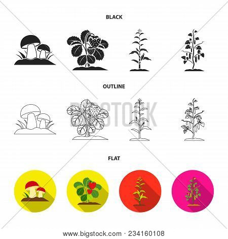 Mushrooms, Strawberries, Corn, Cucumber.plant Set Collection Icons In Black, Flat, Outline Style Vec