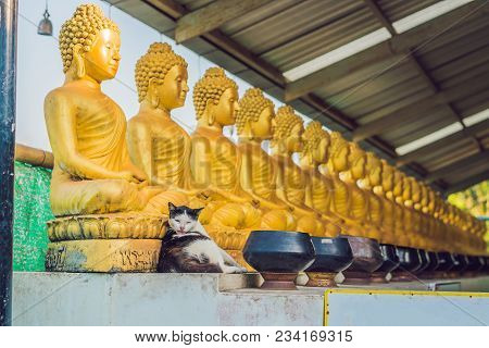 The Cat Sits On The Background Of Buddha Statues, Face Of Gold Buddha, Thailand, Asia.
