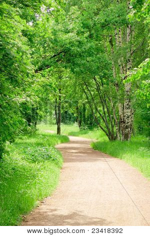 Green Wallpaper Forest View Sunlit Path