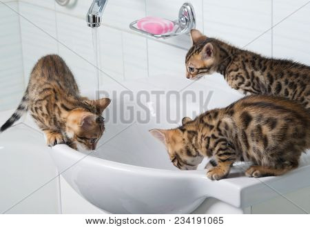 three small kittens drink water and play with water, in the washing room poster