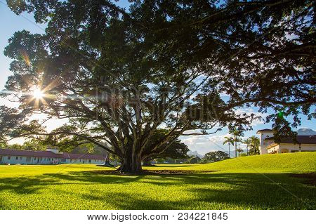 Beautiful Park With University Of Hawaii During Sunny Day Near Honolulu.