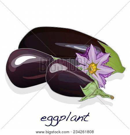 Eggplant Or Aubergine Vegetable Isolated