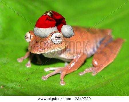 Weihnachten Frosch!