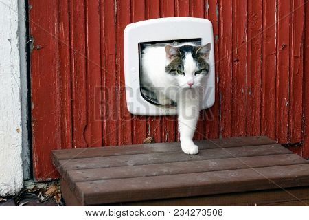 Domestic Cat Using Cat Flap And Comes Out Independently.