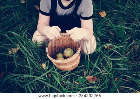A young girl picking up some apples