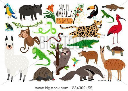 South America Animals. Vector Cartoon Guanaco And Iguana, Anteater And Ocelot, Tapir And Armadillo I