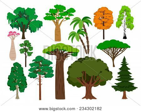 Cartoon Trees. Vector Green Tree Set, Brachychiton And Rowan, Palm And Willow, Maple And Poplar Fore