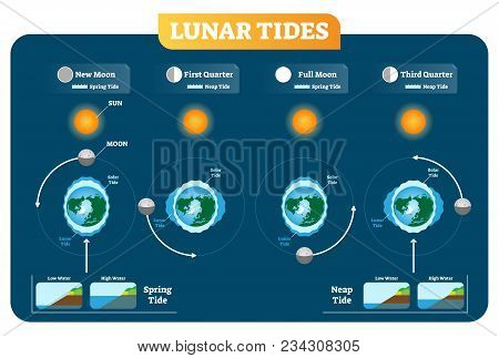Lunar And Solar Tides Vector Illustration Diagram Poster Infographic. Spring And Neap Tide Scheme. G