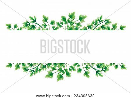 Green Parsley Leaves At The Borders Of The Illustration On The Top And Bottom. Inside An Empty White