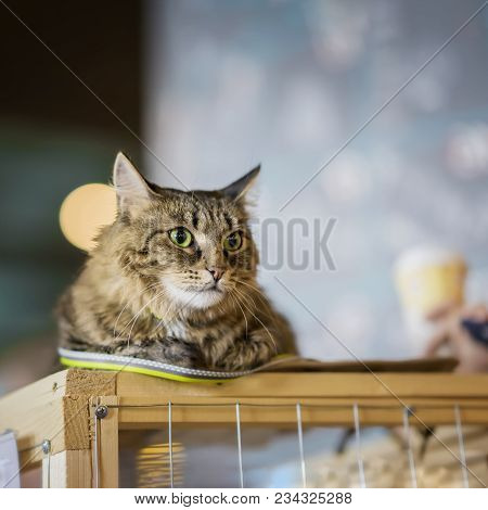 Sad Homeless Alone Cat With A Frightened Look, Lying On Cage In A Shelter Waiting Waiting For A Home