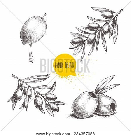 Sketch Hand Drawn Olives Set. Olive Fruit With Oil Drop, Boneless Olives And Olive Branches With Lea
